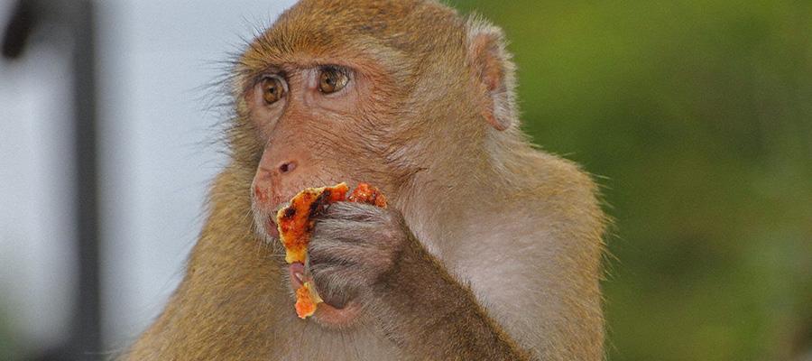 泰國芭堤雅綠山國家動物園門票,芭堤雅綠山國家動物園,泰國綠山國家動物園門票,泰國綠山國家動物園門票,泰國國家動物園門票,芭堤雅電子票