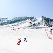 韓國平昌Alpensia滑雪教學課程(英語私教)