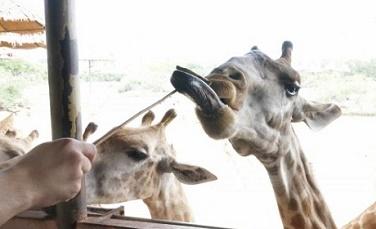 曼谷野生動物園門票六合一套票