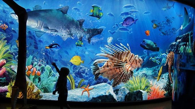 曼谷暹羅海洋世界全套票(水族館+玻璃船+4D電影)