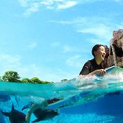 新加坡水上探險樂園+海豚園套票