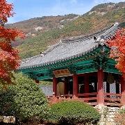 2019韓國邊山半島+來蘇寺紅葉一日遊(韓牛火鍋)
