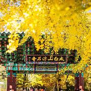 2019韓國榮州浮石寺+丹陽傳統市場+小白山賞楓一日遊