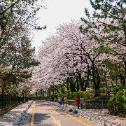 [4月賞櫻]仁川海邊自行車+月尾船+《鬼怪》拍攝地一日遊(含午餐)