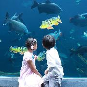 布吉島Aquaria Phuket水族館門票