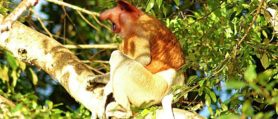 沙巴紅樹林一日遊,沙巴亞庇紅樹林一日遊,沙巴紅樹林旅遊攻略,沙巴紅樹林自助遊攻略,婆羅洲Klias紅樹林