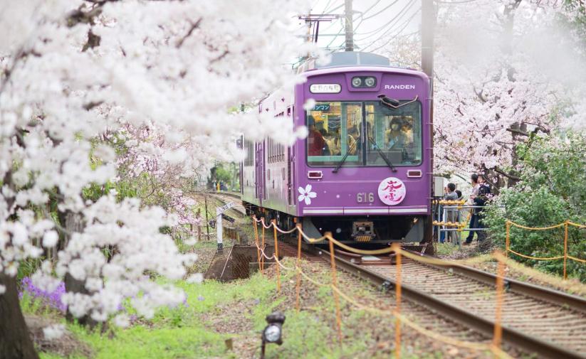 【櫻花季節2020】首次去日本旅遊賞櫻必看