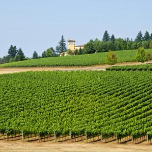波特蘭出發,威拉米特(Willamette )葡萄酒之鄉單車之旅