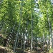 黃山市木坑竹海