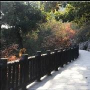 銅川市照金香山
