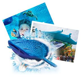 珠海長隆海洋王國門票(電子票)